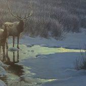 Evening Elk