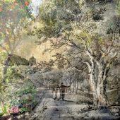 Gallery 8 Salt Spring Island-Artist Avril Kirby
